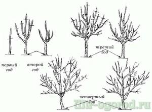Преимущества обработки дерева
