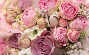 Пионовидная роза флорибунда в саду