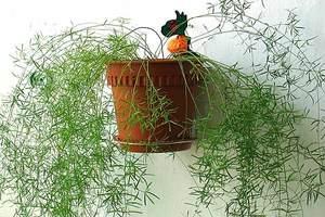 Как вырастить растение в доме