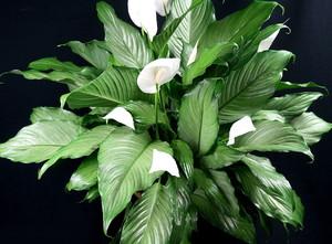 Народные поверья про цветок