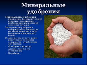 Результат внесение минеральных удобрений