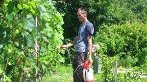 Применение Лепидоцида для плодовых деревьев и виноградников